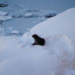 Seal hiss