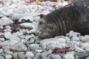 Hermit Island E-seal