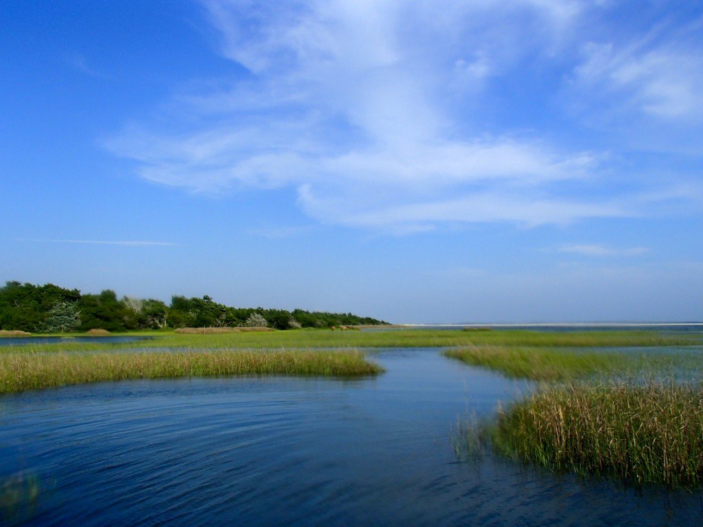 The serene Rachel Carson Reserve. Photo by Shannon Switzer.