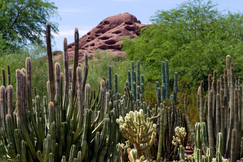 So many cacti!