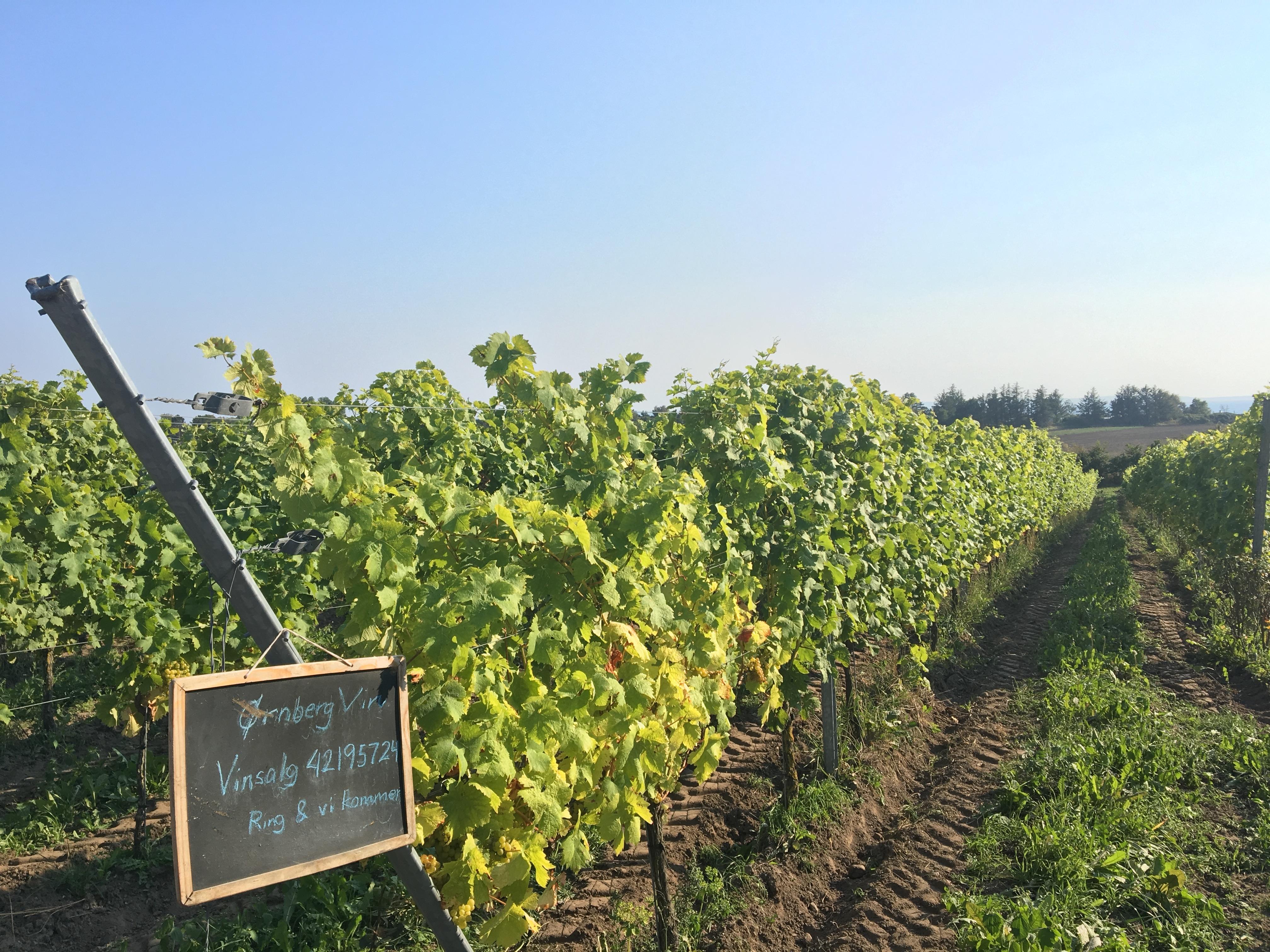 Image result for danish vineyards