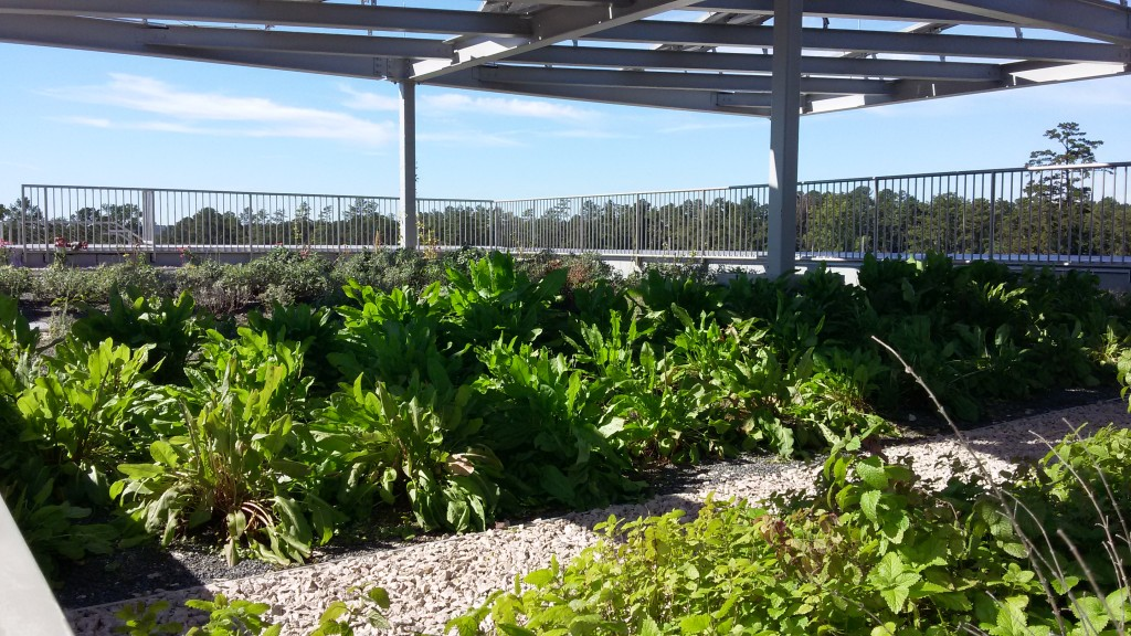 EH rooftop garden