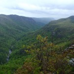 Linville Gorge Wilderness Area. Photo public domain.