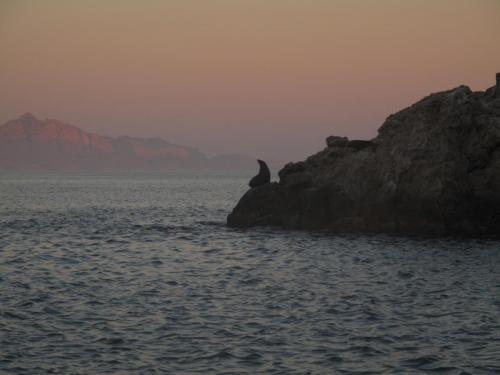 Seal Sunset