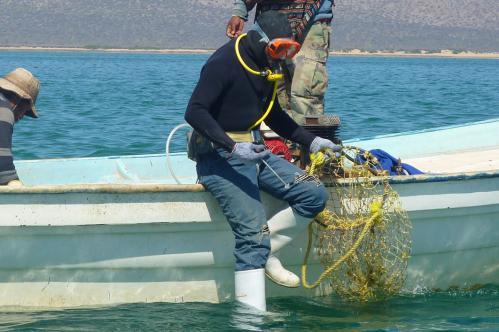05-CDH diver