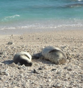 Two seals sound asleep on the warm beach.