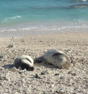 Two seals sound asleep on the warm beach.