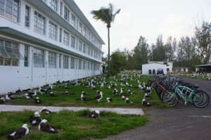 "Goodbye to Charlie (barracks) Hotel, our resident ""albies"" and Bikes"
