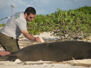 Bleaching a monk seal