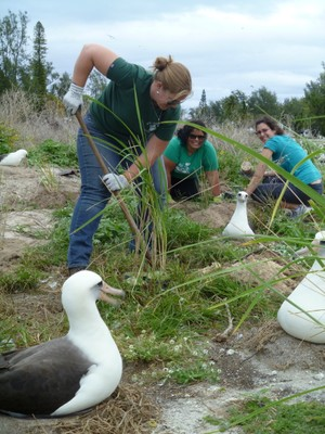 Verbensina be gone! Dani, Pati, and Sarah happily weeding and reintroducing lovely native bunch grass.