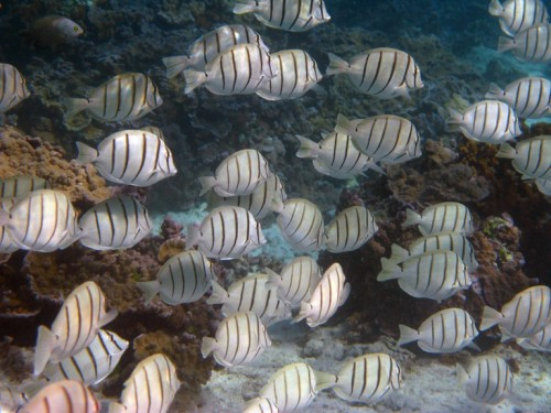 Cloud of convict tangs