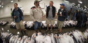 Class at Fish Auction 5