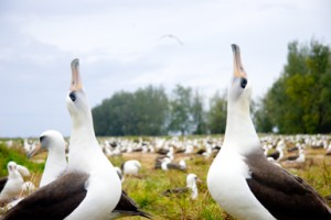 4.5 million tons of plastic brought back to the Midway Islands by the 1,000,000 albatross residents.