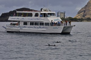 Another dolphin cruise getting awfully close to spinners.
