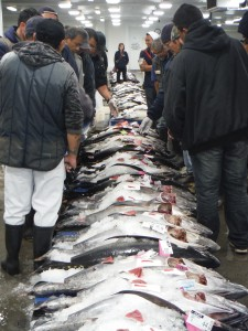Local buyers assessing today's haul of Big-Eye Tuna.