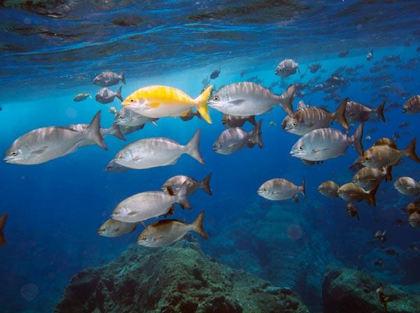 Fish Wong