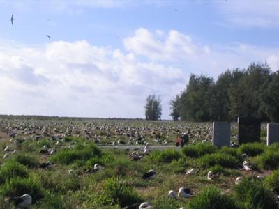 Albatross everywhere