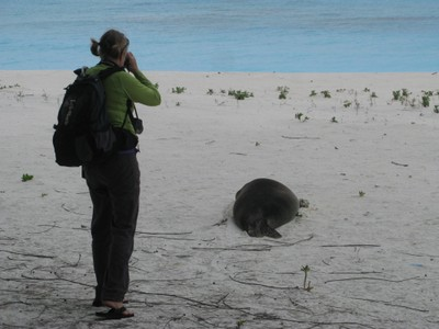 In an effort to get a better look at a flipper tag, Tracy approaches the animal quietly to photograph.