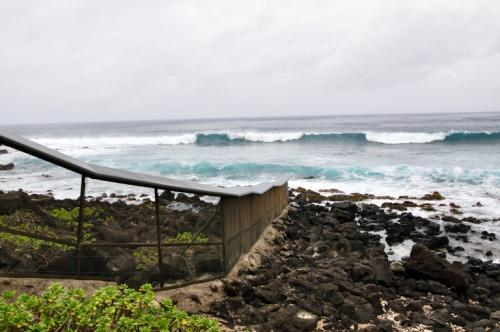 An anti-predator fence that allows native animals and plants to thrive on Ka'ena Point.