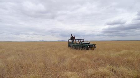 Who needs roads? Driving through endless fields of golden grass.