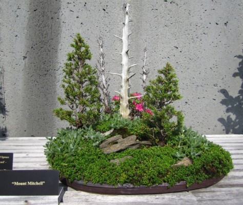 Here are a only a few examples of the diverse array of Bonsai in the Bonsai Garden.