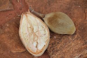 Baobob Fruit