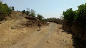 Haila road