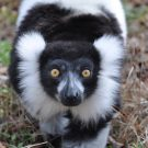 The Connection Between Lemurs, Researchers and the Community