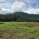 Sustainability through Native Hawaiian Taro Plant Farming Practices