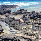 An Uncertain Future for Hawaiian Monk Seals
