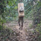 In Pursuit of Illegal Loggers in India