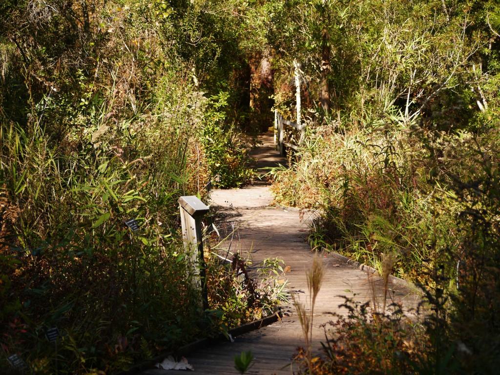 outdoor devil north carolina botanical garden