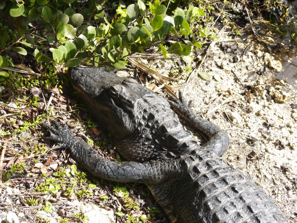 outdoor devil everglades san felasco florida