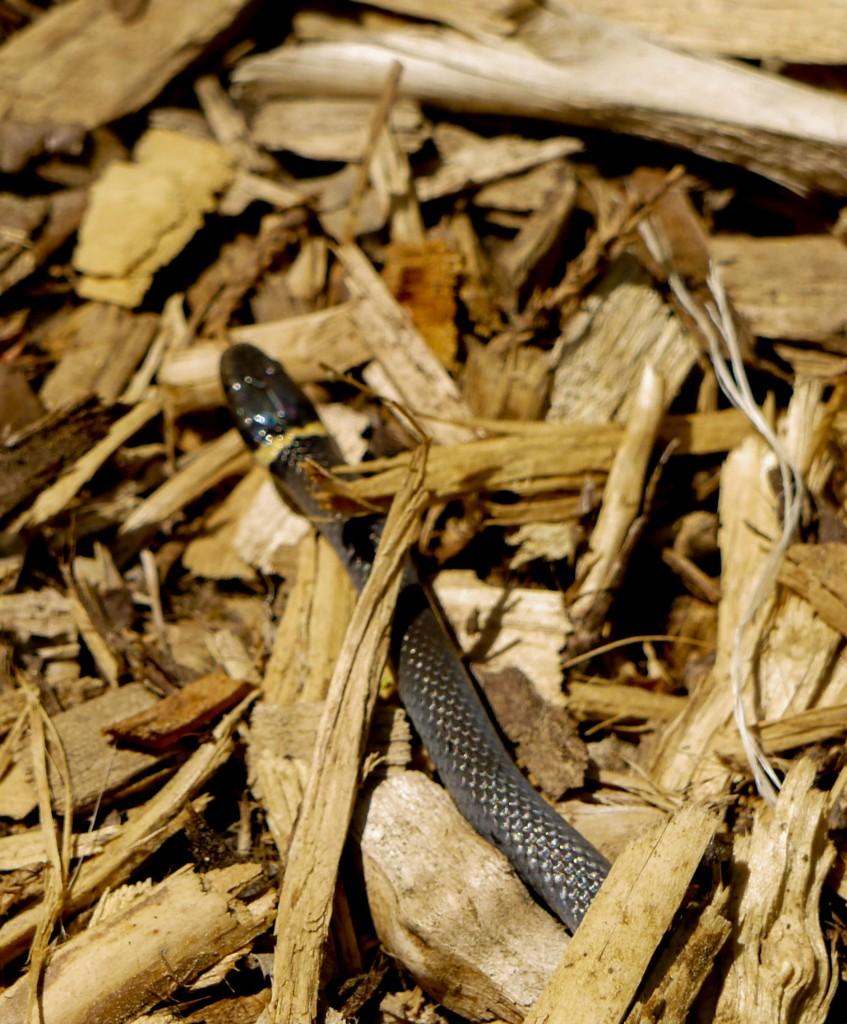 outdoor devil hemlock bluffs nature preserve