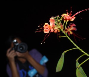 nighttime photography, blossoms, flower, duke gardens, sunset