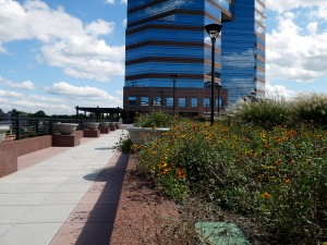durham, green roof, flowers, blossoms