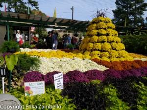 garden show, nc state fair, flowers, blooms, mums