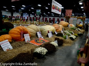 north carolina, state fair, pumpkins, vegetables
