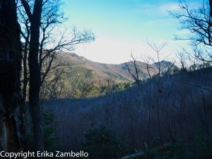 linville gorge, north carolina, hiking, fall, trees, mountains, landscape