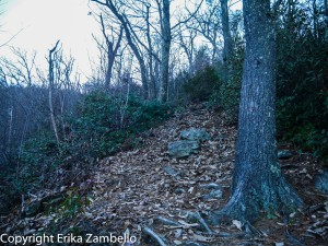 trail, hiking, linville gorge, north carolina
