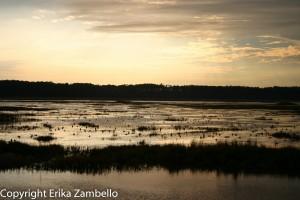 lake mattamuskeet, sunset, water, waterfowl, birding, north carolina, outdoor devil