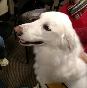 dogs, dog therapy, library, duke