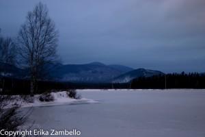 moose, maine, winter, lake, wildlife, nature