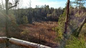 alabama, forest, tree, birding, sunrise