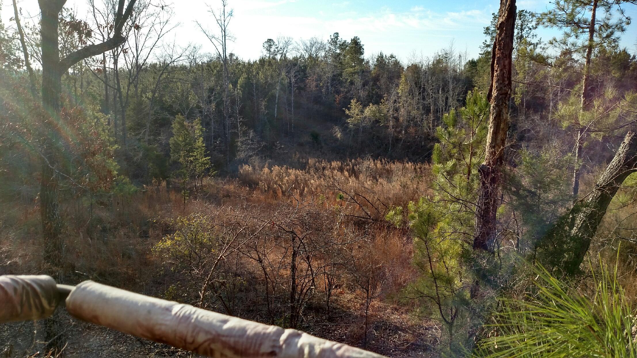 Birding Sunrise In Alabama Outdoor Devil