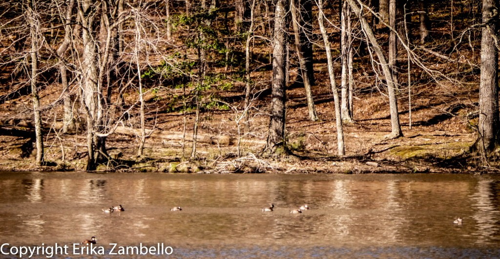 umstead, park, birding