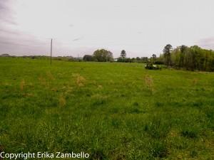 schenck forest, nc state, birding, field