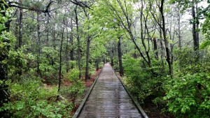 outer banks, trail, boardwalk, birding