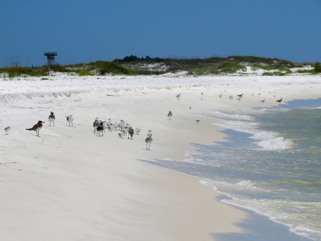 birding, florida, migration