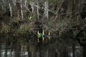 Florida, plant, naturalist